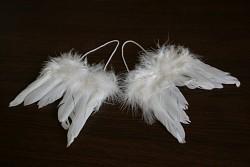 Andělská křídla - 2 páry