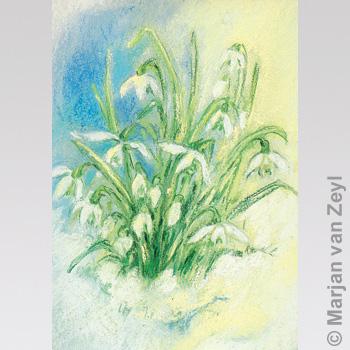 Obrázek Marjan van Zeyl - Sněženky