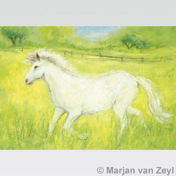 Obrázek Marjan van Zeyl - Bílý koník