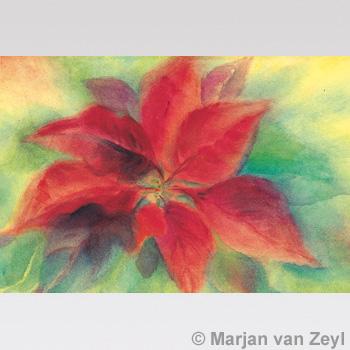 Obrázek Marjan van Zeyl - Vánoční květ