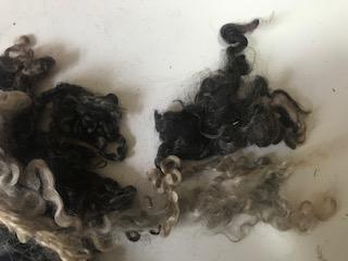 DOBRODĚJ Ovčí vlna přírodní šedá - vlnitá - 5 g
